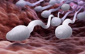jak zwiększyć ilość spermy